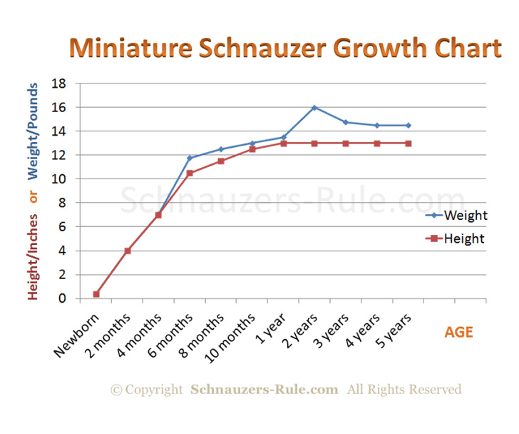 miniature-schnauzer-puppy-growth-rate-chart