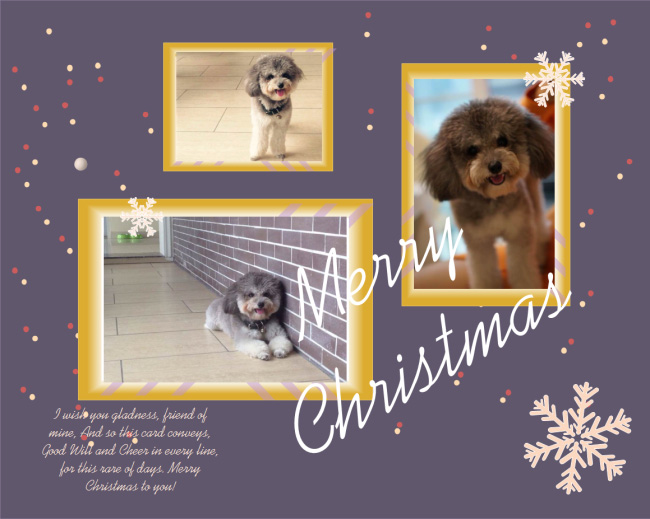 multiple-photos-christmas-card
